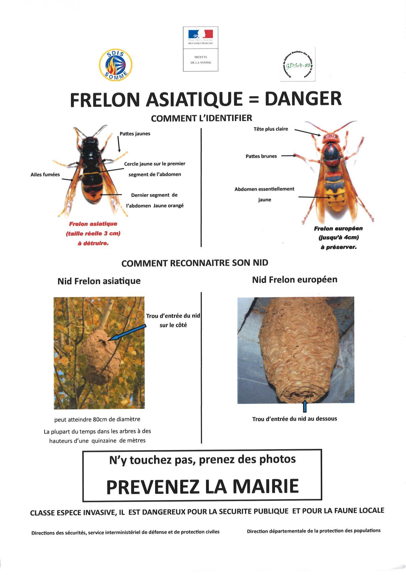 Identifier les frelons